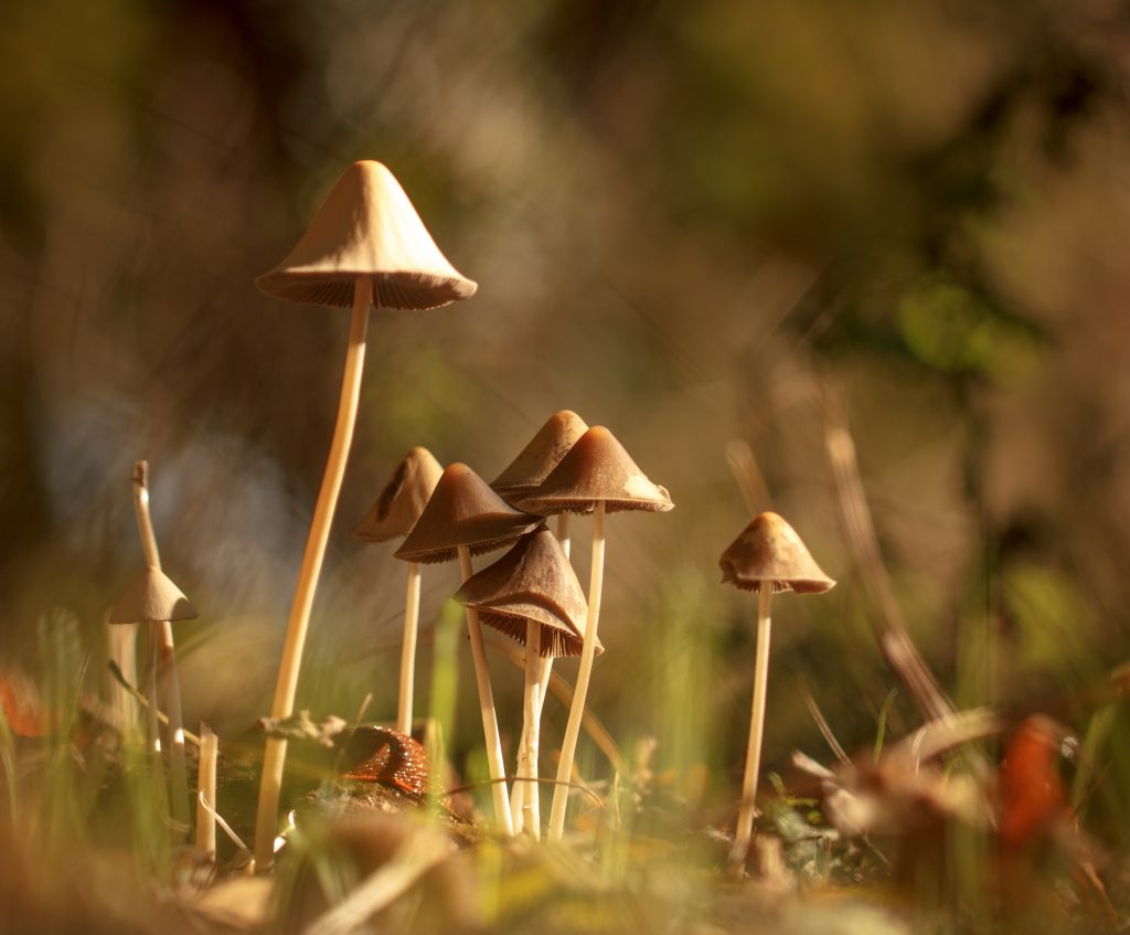 Gael Neuez - Photographe nature - Valdoisenature