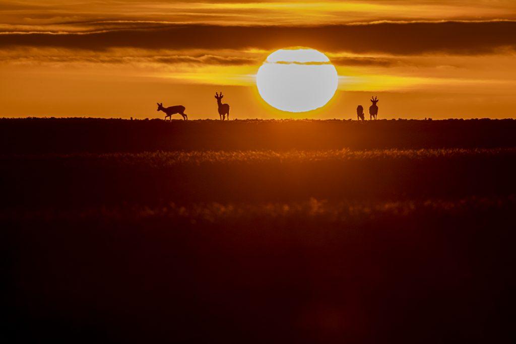 Thomas Nazaret - photographe nature - valdoisenature