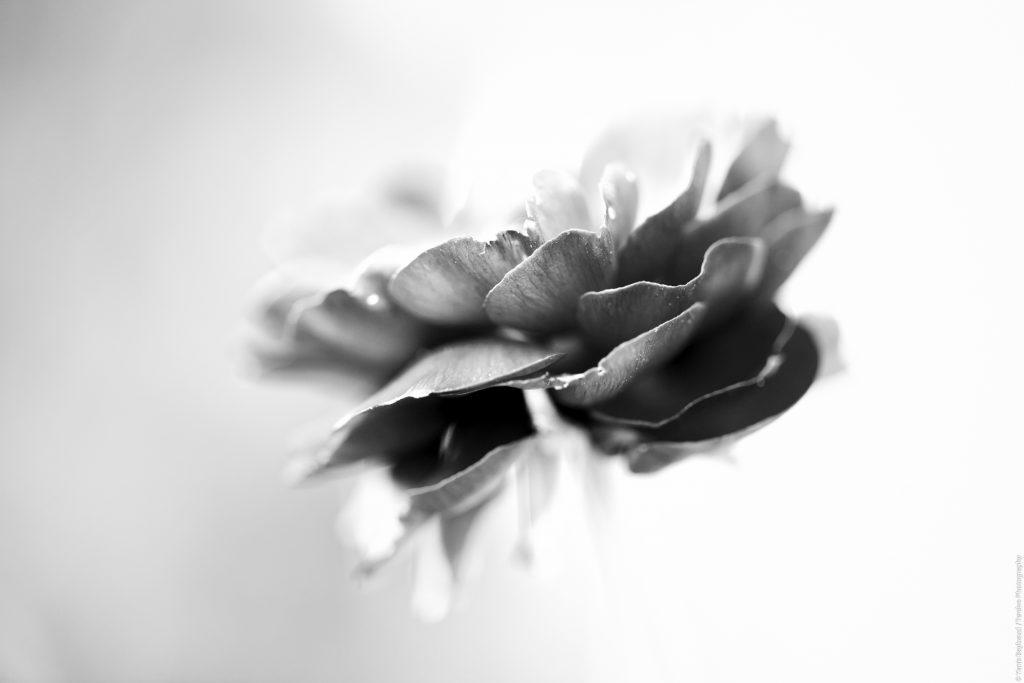 Yanis Baybaud - Fleurs - Valdoisenature
